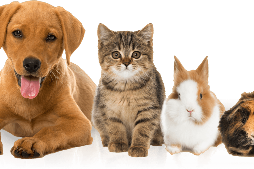7 Errors To Keep away from When Buying Pet Insurance coverage