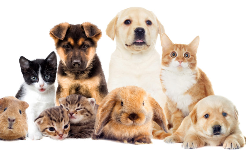Is Pet Well being Insurance coverage For You?