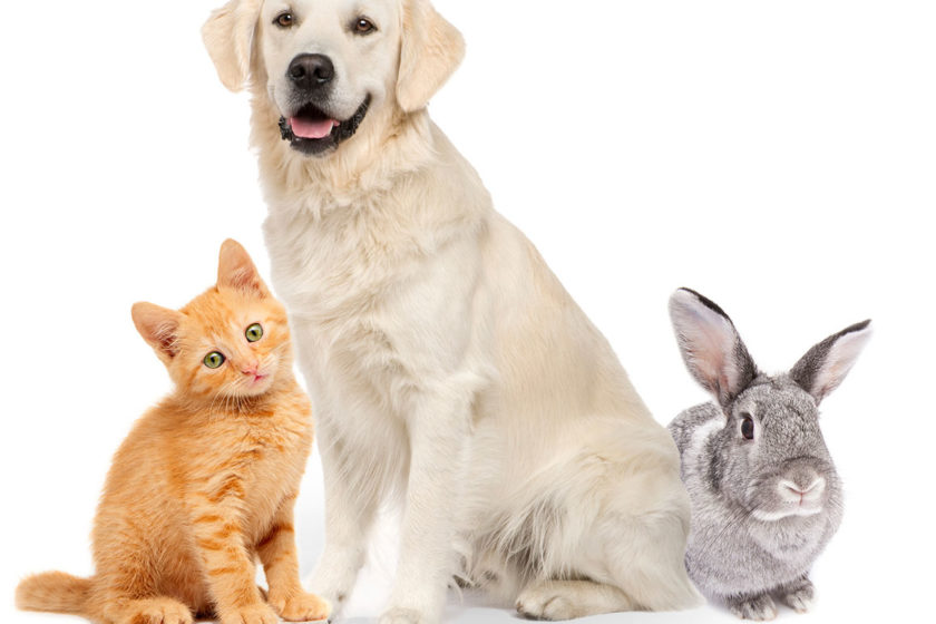 Most Frequent Canine Accidents That Are Coated by Pet Insurance coverage