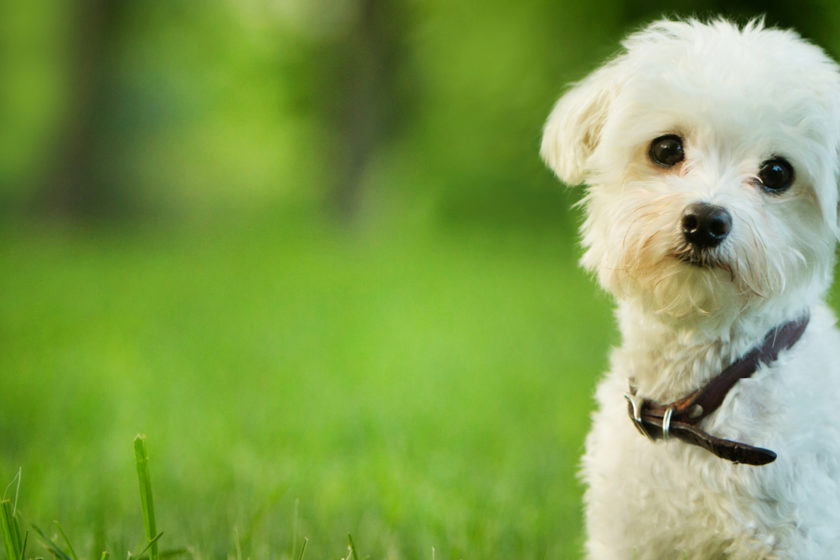 The place to Get Pet Insurance coverage